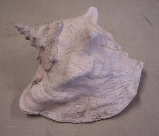 Item #SH017 - Conch Shell
