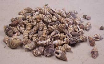 Item #SH010 - Natural Mini Shells