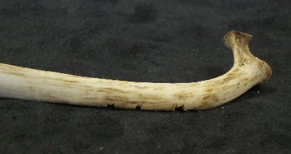 Item #FKS019 - Rib Bone Notcher
