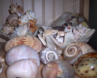 Shells and Fossils